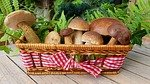edible mushrooms photo